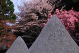 上賀茂神社 立砂とみあれ桜