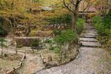 京都直指庵 参道と庭園の散桜