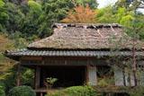 滝口寺 本堂と葉桜