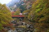 京都清滝 ヤマザクラと渡猿橋