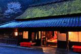 平野屋と山桜