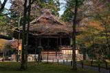 三千院の山桜と往生極楽院
