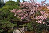 大原寺宝泉院 里桜と五葉乃松