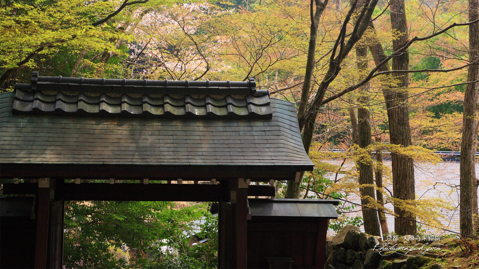 大原寺来迎院 山門と山桜