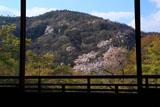 瑠璃光院 書院からの山桜