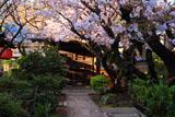 雨宝院 歓喜桜と観音桜