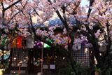 雨宝院 歓喜桜と観音堂