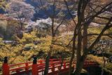 梅ケ畑 指月橋と桜