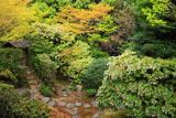妙心寺桂春院 思惟の庭のアセビ