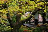 妙心寺桂春院 モミジの花