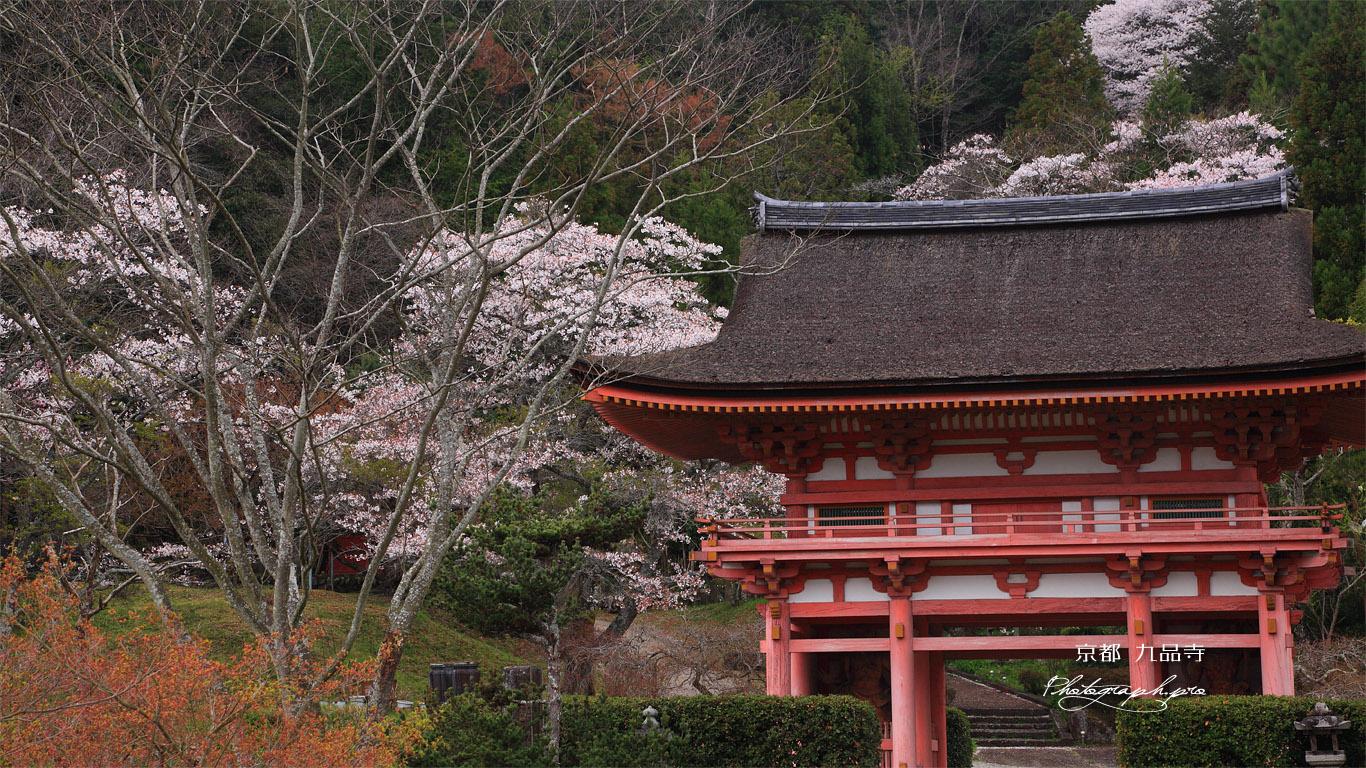 九品寺 大門と桜 壁紙