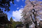 熱那神社の桜