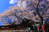 吉祥寺の新羅桜と山門
