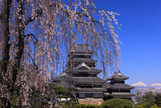 信州松本の桜