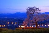 アルプス公園の桜 提灯点燈