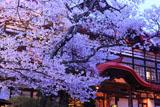 高遠城址公園の桜と高遠閣