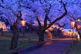 高遠城址公園の桜と二の丸の露店