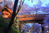 高遠城址公園の桜 桜雲橋と問屋門
