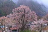 氏乗のしだれ桜と分校の跡