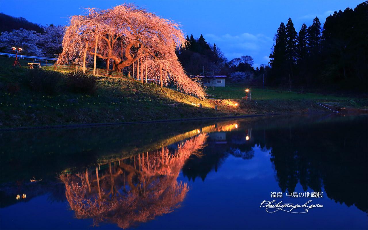 中島の地蔵桜 壁紙