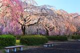 榴岡公園のベンチ