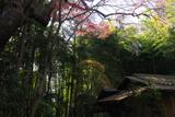 瑞鳳寺の彼岸桜