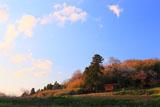 金剛桜と夕焼け雲