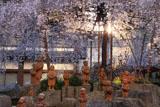 六角堂 御幸桜と十六羅漢像