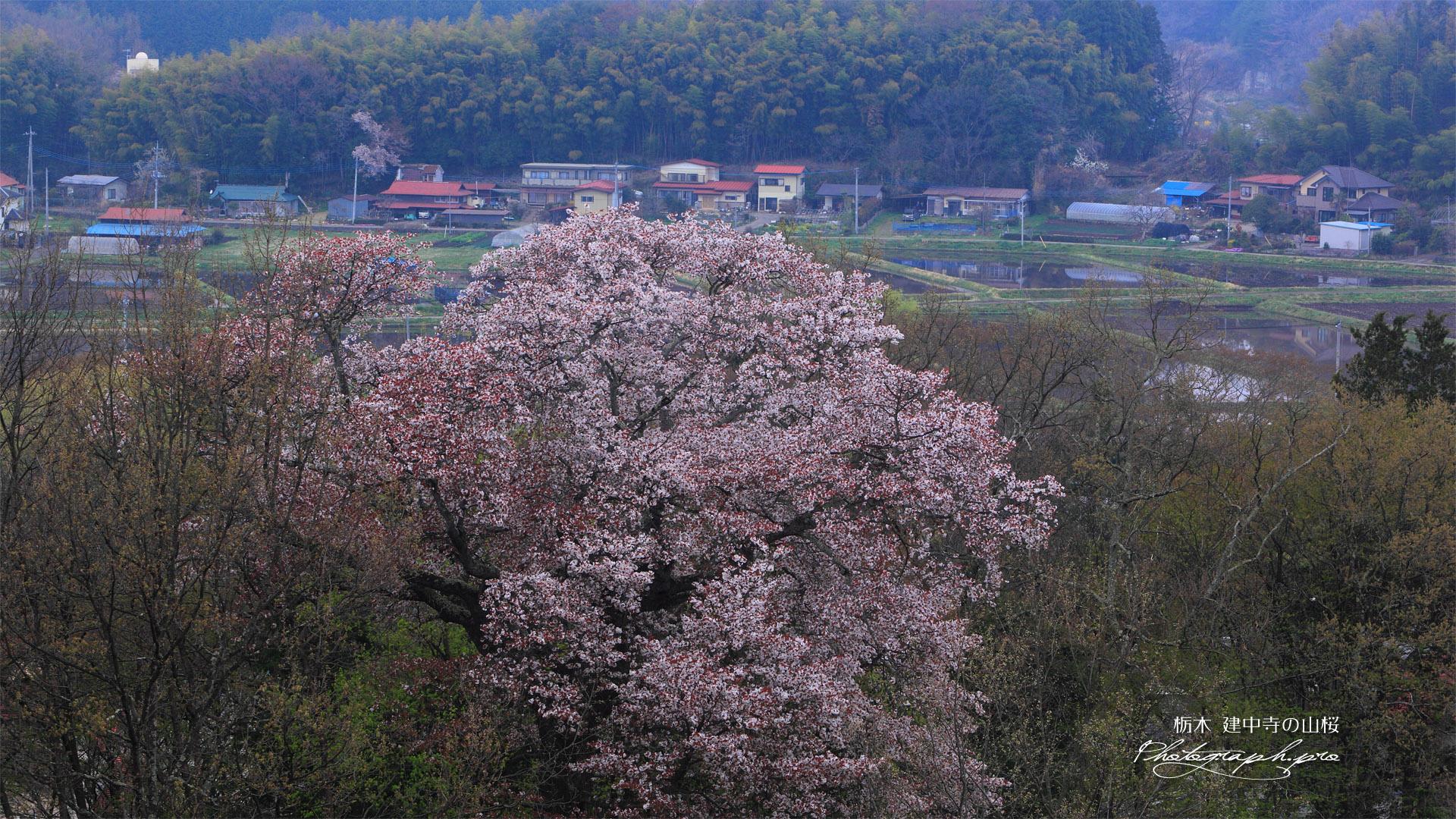 建中寺の山桜と芦野の里
