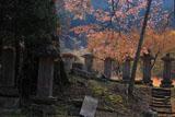 建中寺の山桜と芦野氏の新墳墓