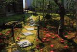 霊鑑寺 庭園の落椿