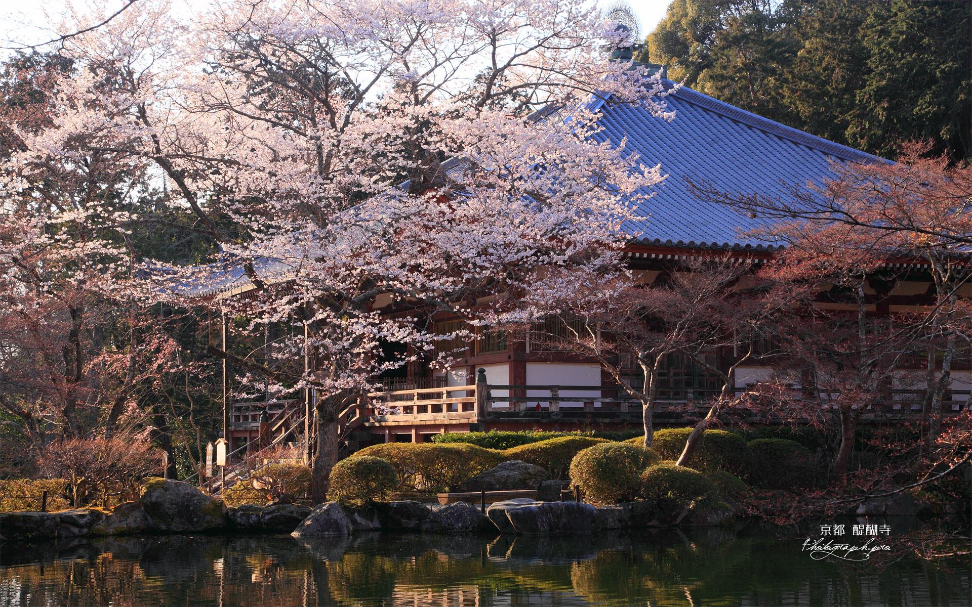 醍醐寺 桜と大講堂の壁紙 ...