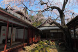 京都十輪寺 サクラ咲く三方普感庭