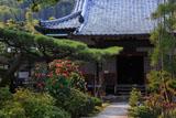 京都正法寺 ツバキと本堂