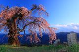 石仏と葛窪しだれ桜