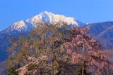 甲斐駒ケ岳と田端しだれ桜