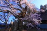 高森観音堂しだれ桜と石塔