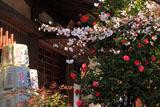 千本釈迦堂 桜と椿と北野経王堂