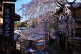 三年坂のしだれ桜