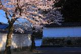 勧修寺 桜と白壁