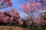 熊野若王子神社 桜花苑からの眺望