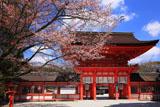 下鴨神社 山桜と楼門