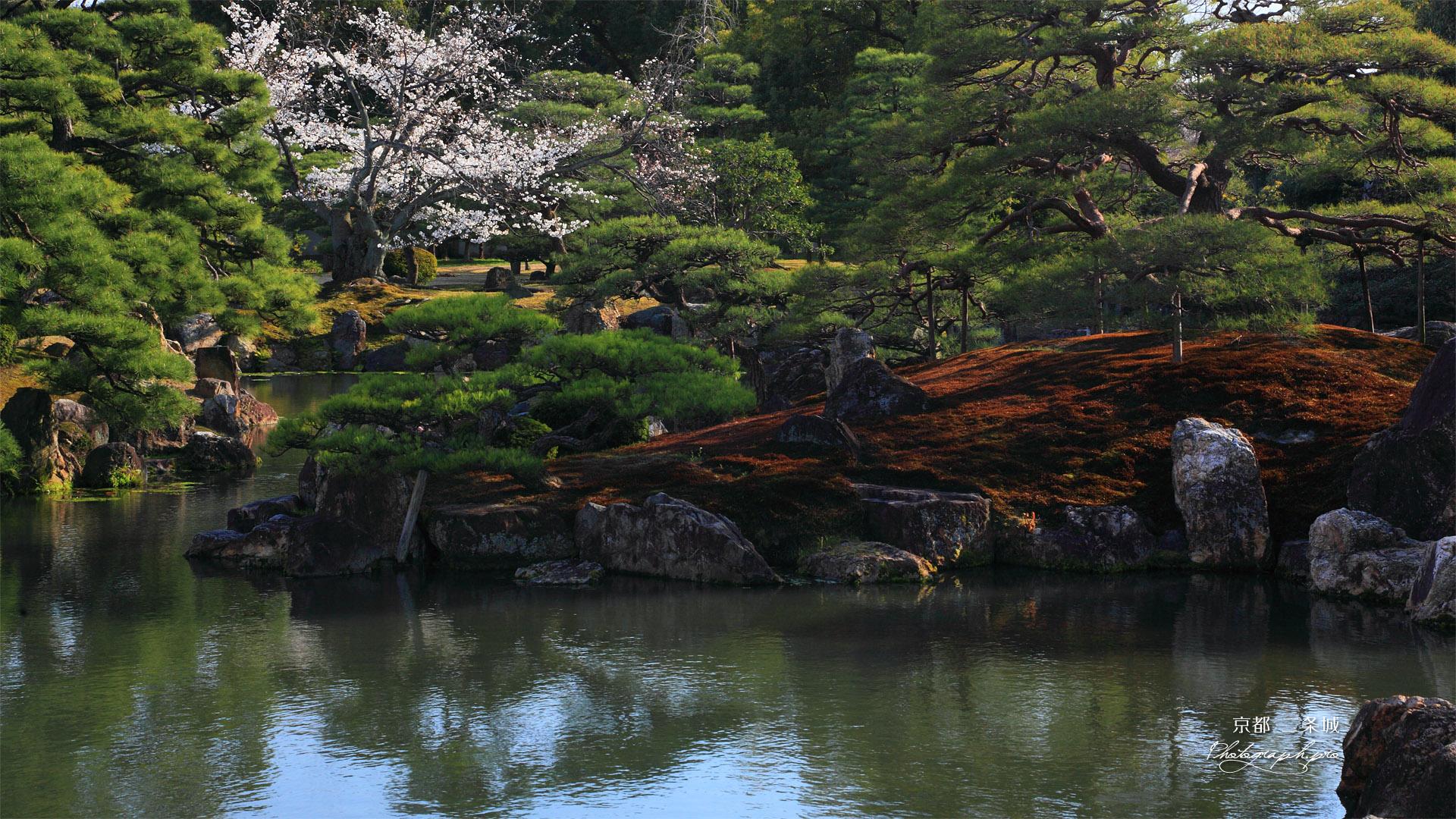 二条城 桜咲く二の丸御殿庭園