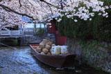 高瀬川 一之舟入の桜と高瀬舟