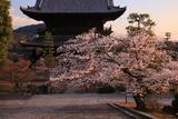 金戒光明寺 桜と山門