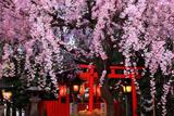 水火天満宮 宵の枝垂れ桜と六玉稲荷