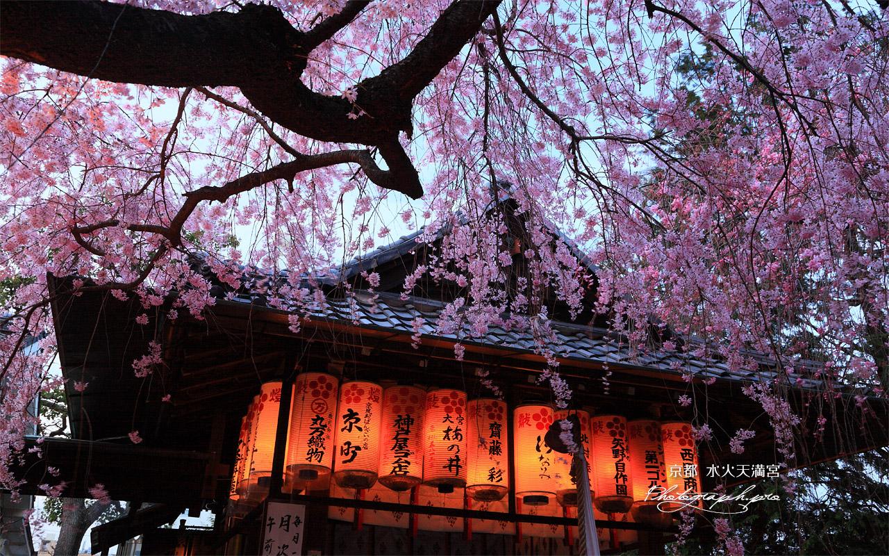 水火天満宮 宵のしだれ桜と拝殿 壁紙