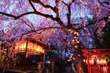 水火天満宮 夜桜ライトアップ