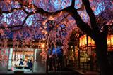 水火天満宮 宵桜と社務所