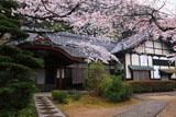 山崎聖天 庫裡の桜
